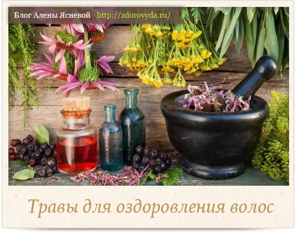 Травы для волос - самые полезные рецепты и способы применения трав