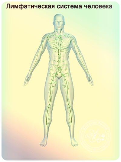 лимфатический массаж тела сухой щеткой