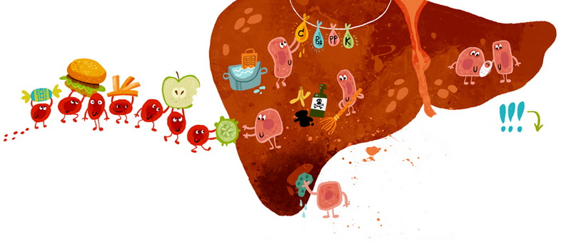 печень и иммунитет