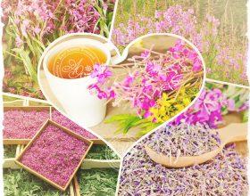 Миниатюра к статье Всё всё про Иван-чай—  лечебные свойства , фото, рецепты, правила сбора, вред
