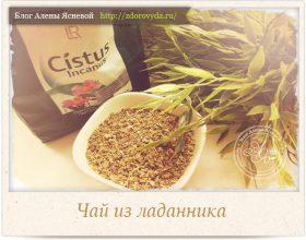 Миниатюра к статье Про ароматный и целебный чай из ладанника— секреты применения