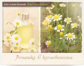 Миниатюра к статье Ромашка аптечная— все про любимый цветок косметологов