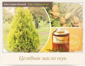 Миниатюра к статье Масло туи— натуральное лекарство для лечения  уха, горла и носа