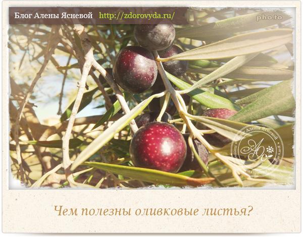 Экстракт листьев оливы