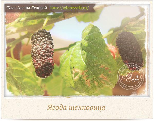Ягода шелковица