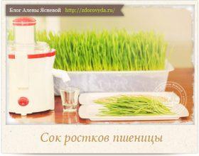 Миниатюра к статье Витграсс- сок из ростков пшеницы— целебный нектар здоровья