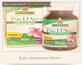 Миниатюра к статье Кора муравьиного дерева или Pau D'Arco—  полезные свойства и секреты применения