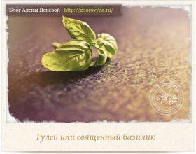 Миниатюра к статье Тулси или чай из священного базилика— секреты применения