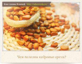 Миниатюра к статье Кедровые орехи— чудесный дар природы для красоты и здоровья