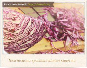 Миниатюра к статье Чем полезна краснокочанная капуста— все о тайных секретах необычного овоща
